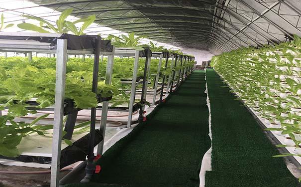 阳光板蔬菜大棚