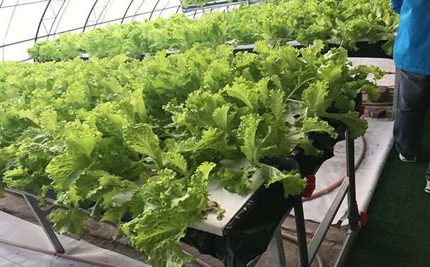 阳光板搭建大蔬菜大棚