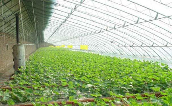 优尼科阳光板搭建的温室大棚
