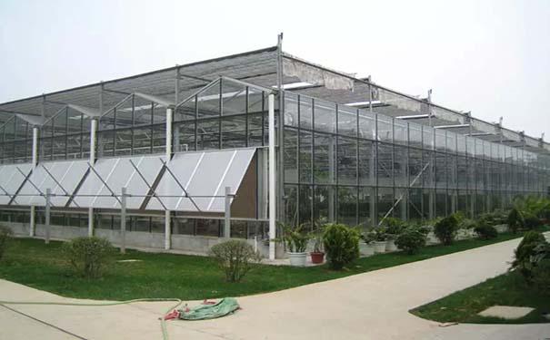 阳光板建造温室大棚有哪些优势?温室大棚还有什么用途?