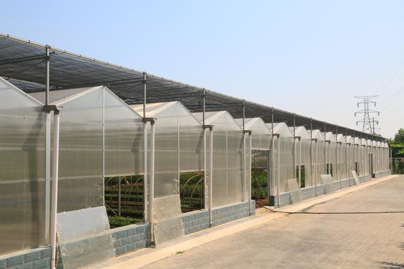 温室大棚造价高不高,该用什么材料建温室大棚